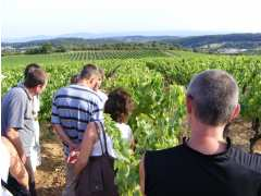 photo de Balade Vigneronne